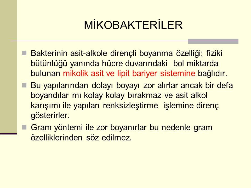 MİKOBAKTERİLER