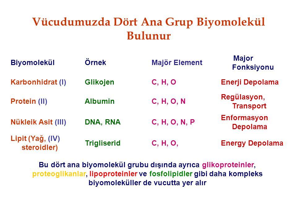 Vücudumuzda Dört Ana Grup Biyomolekül Bulunur
