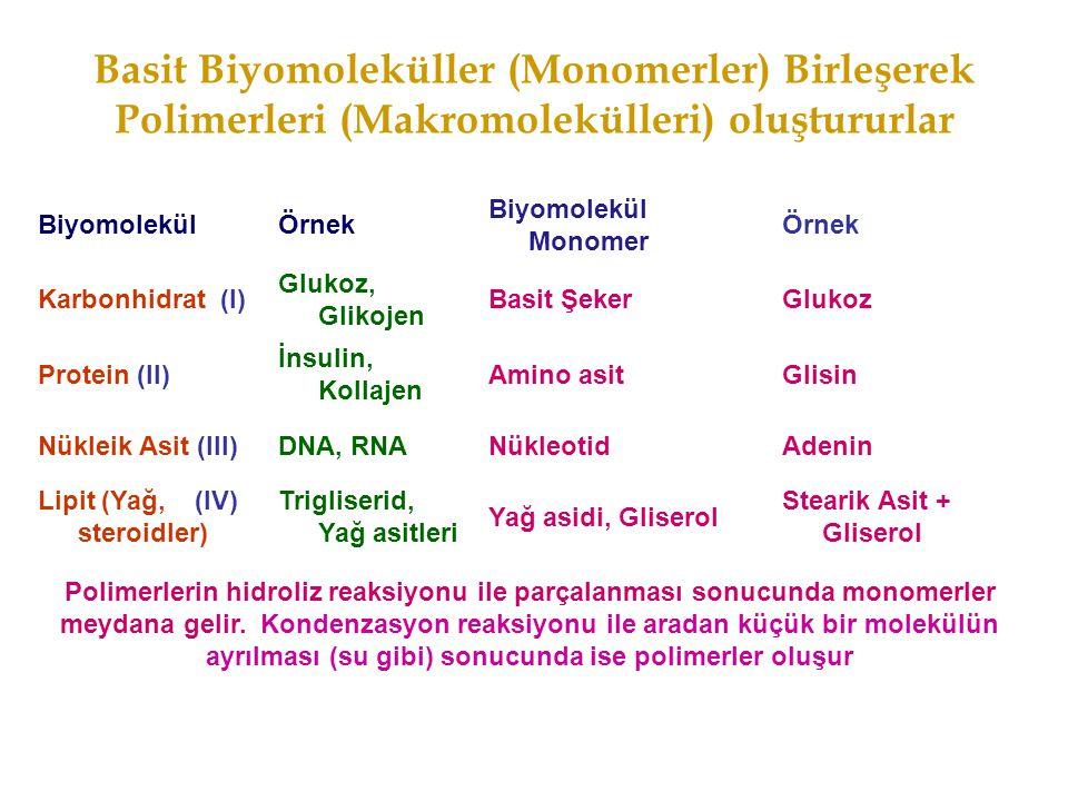 Basit Biyomoleküller (Monomerler) Birleşerek Polimerleri (Makromolekülleri) oluştururlar
