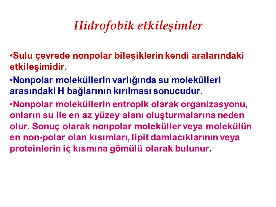 Hidrofobik etkileşimler