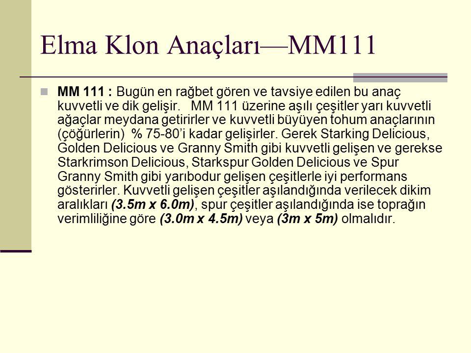 Elma Klon Anaçları—MM111