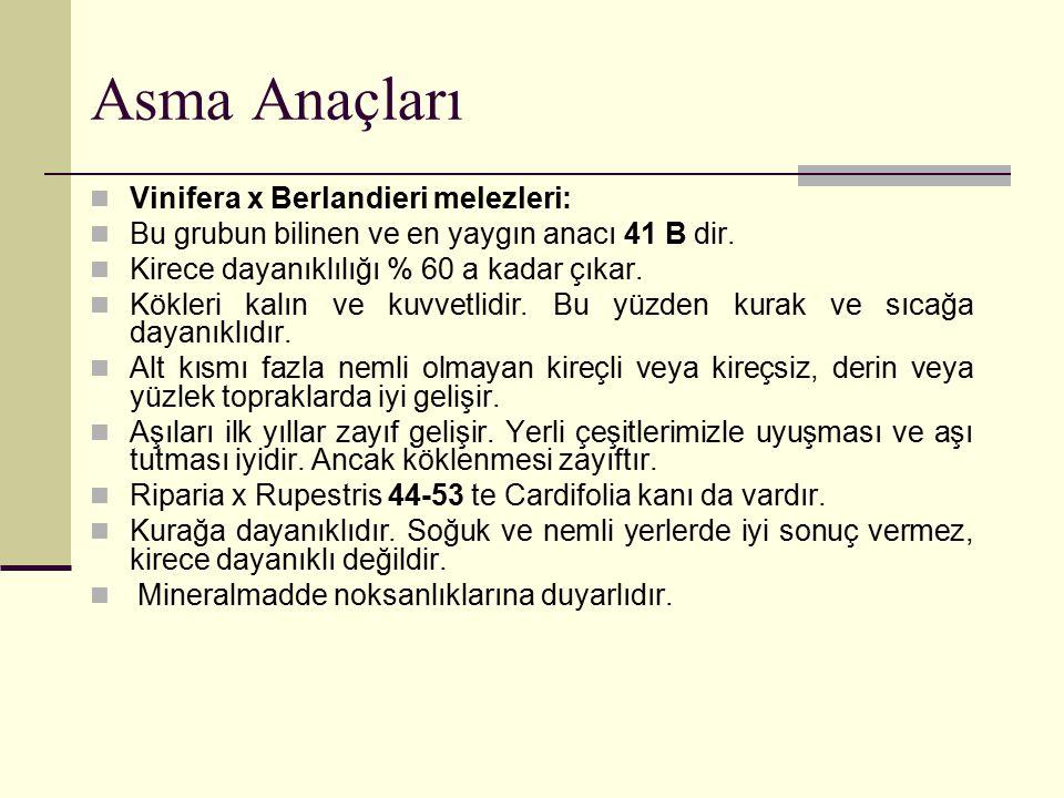 Asma Anaçları Vinifera x Berlandieri melezleri: