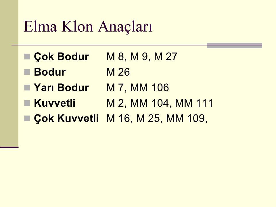 Elma Klon Anaçları Çok Bodur M 8, M 9, M 27 Bodur M 26
