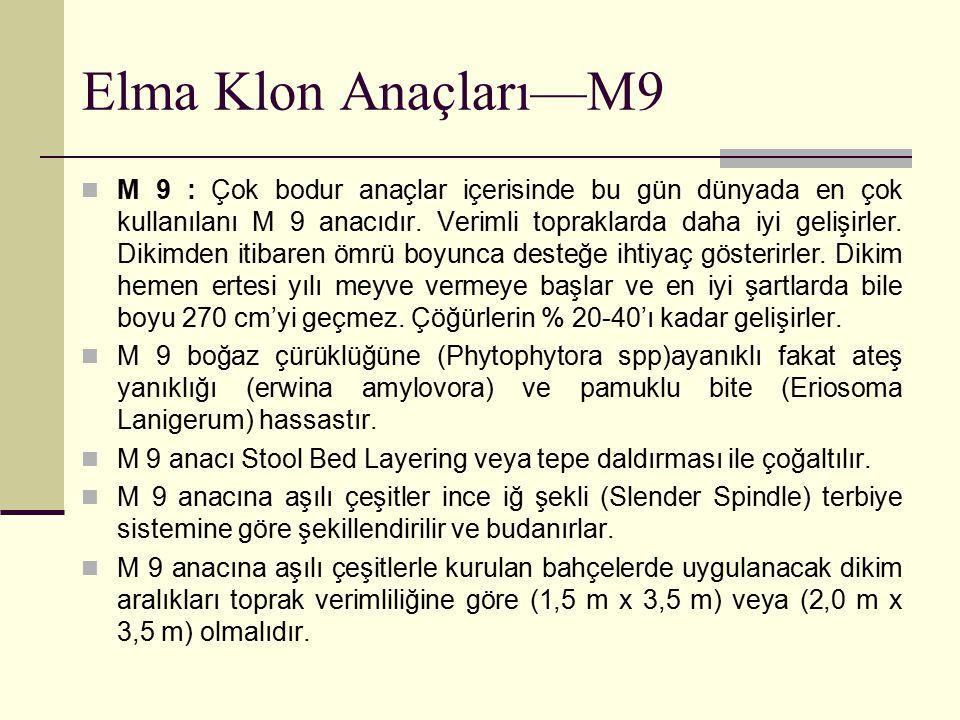 Elma Klon Anaçları—M9
