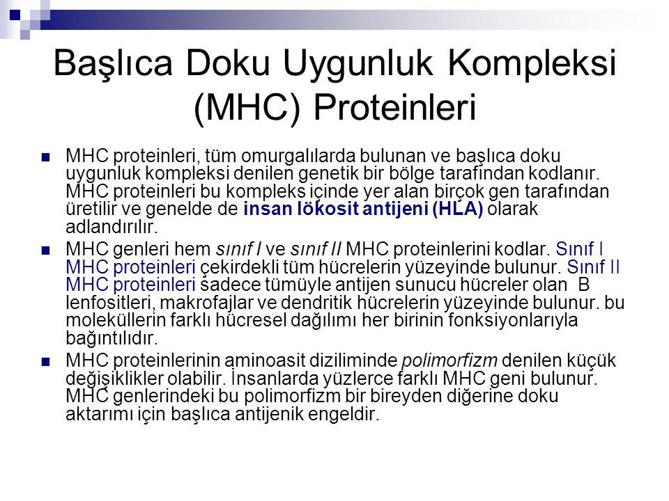 Başlıca Doku Uygunluk Kompleksi (MHC) Proteinleri