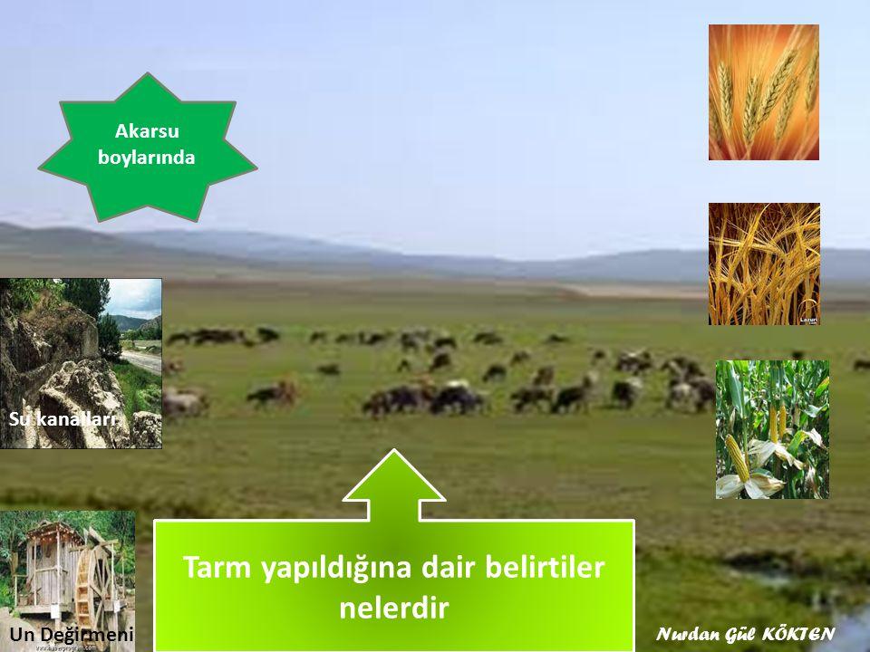Hangi ürünler yetiştirilirdi Orta Asya'da Tarım nerelerde yapılırdı
