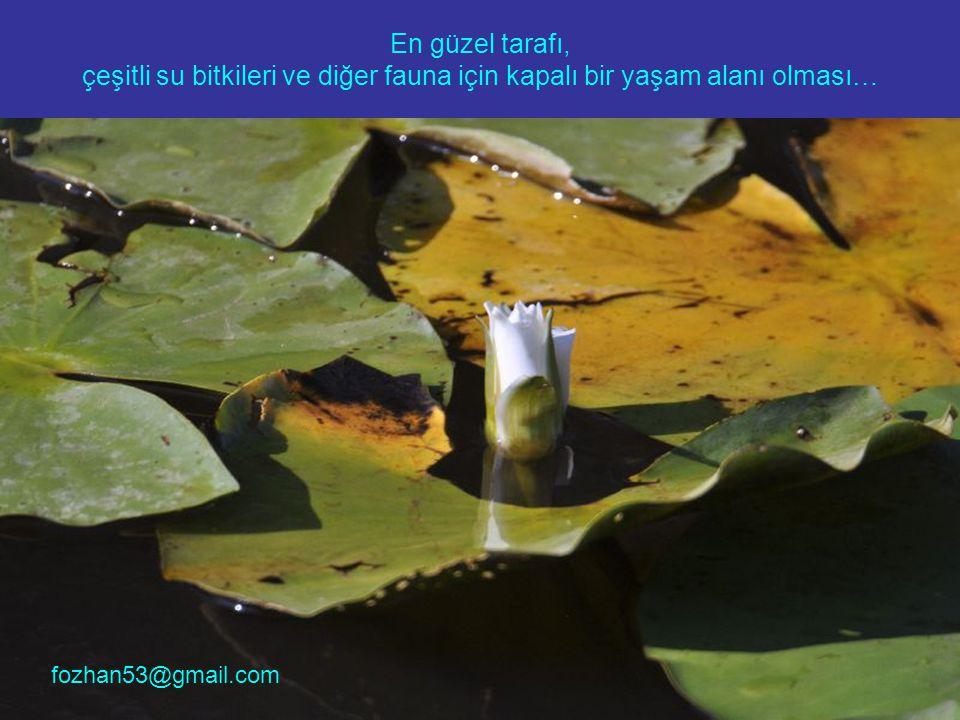 En güzel tarafı, çeşitli su bitkileri ve diğer fauna için kapalı bir yaşam alanı olması…