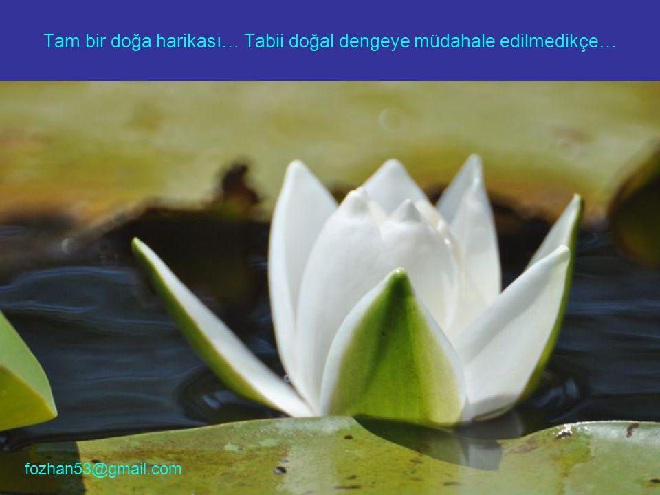 Tam bir doğa harikası… Tabii doğal dengeye müdahale edilmedikçe…