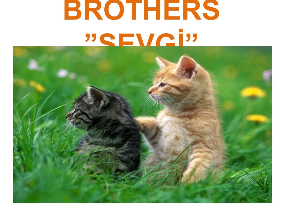 BROTHERS SEVGİ