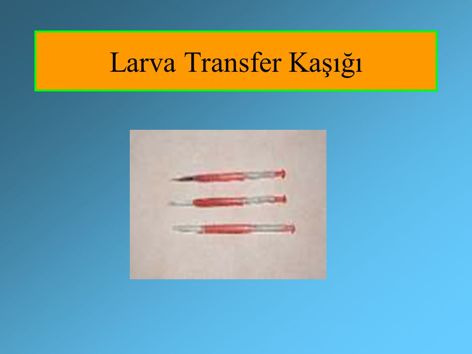 Larva Transfer Kaşığı