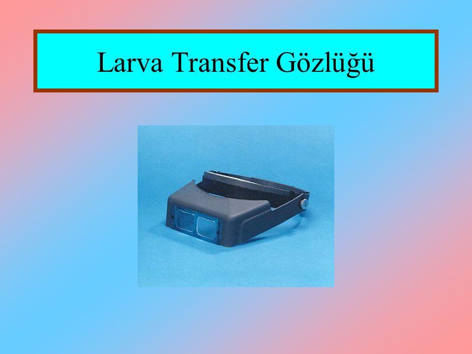 Larva Transfer Gözlüğü