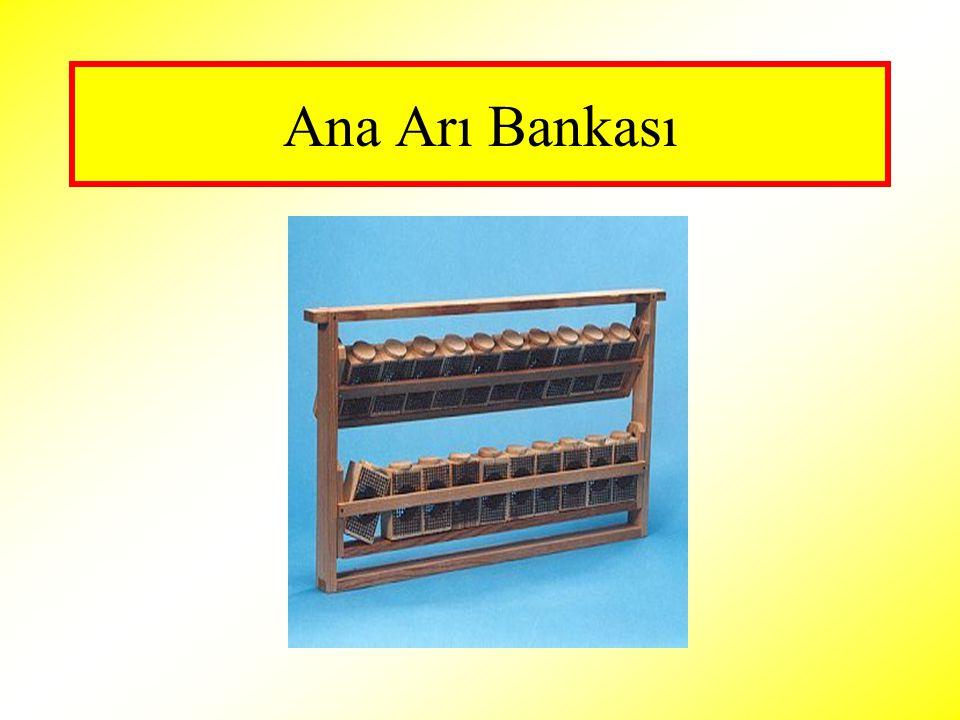 Ana Arı Bankası