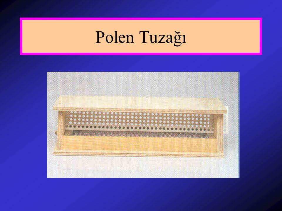 Polen Tuzağı