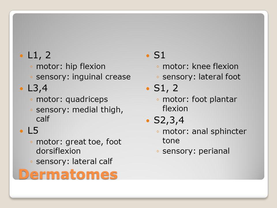 Dermatomes L1, 2 L3,4 L5 S1 S1, 2 S2,3,4 motor: hip flexion