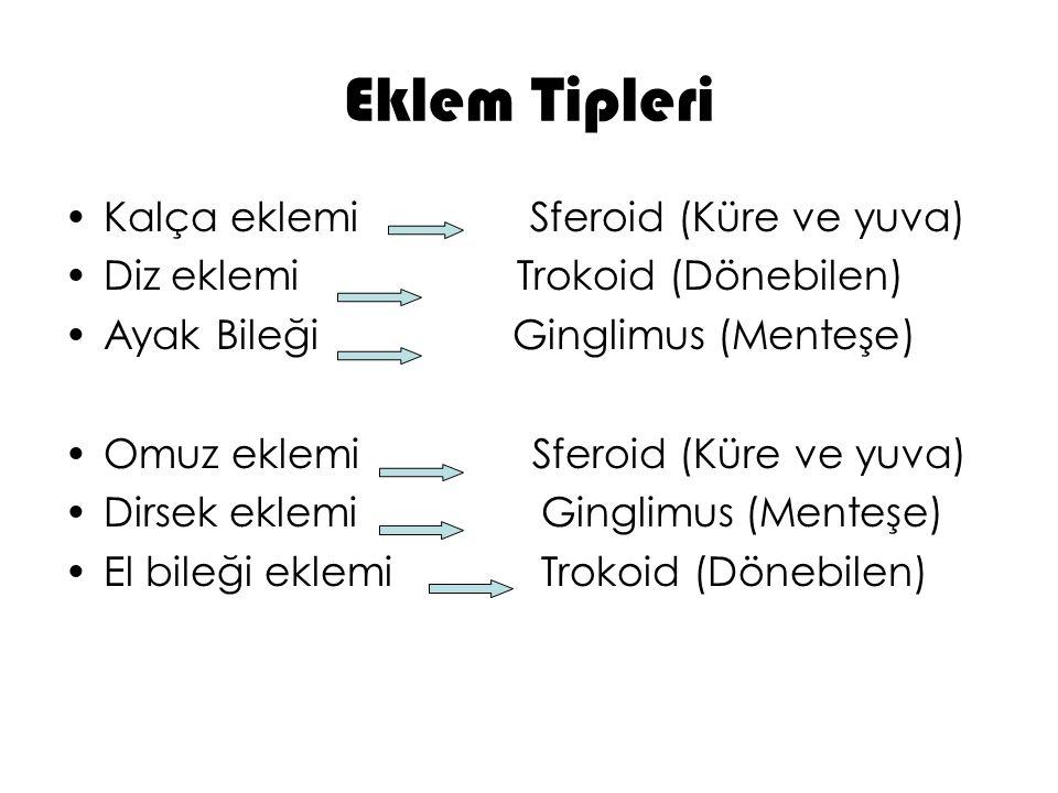 Eklem Tipleri Kalça eklemi Sferoid (Küre ve yuva)