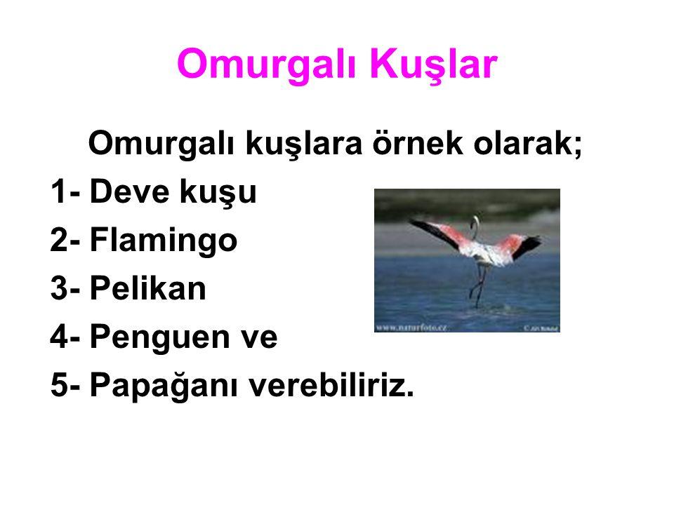 Omurgalı Kuşlar Omurgalı kuşlara örnek olarak; 1- Deve kuşu