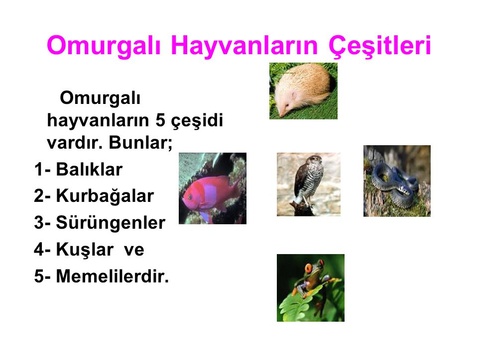 Omurgalı Hayvanların Çeşitleri