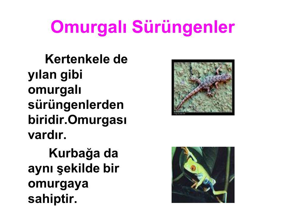 Omurgalı Sürüngenler Kurbağa da aynı şekilde bir omurgaya sahiptir.