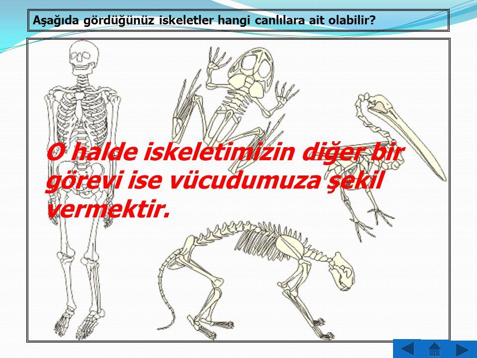 O halde iskeletimizin diğer bir görevi ise vücudumuza şekil vermektir.