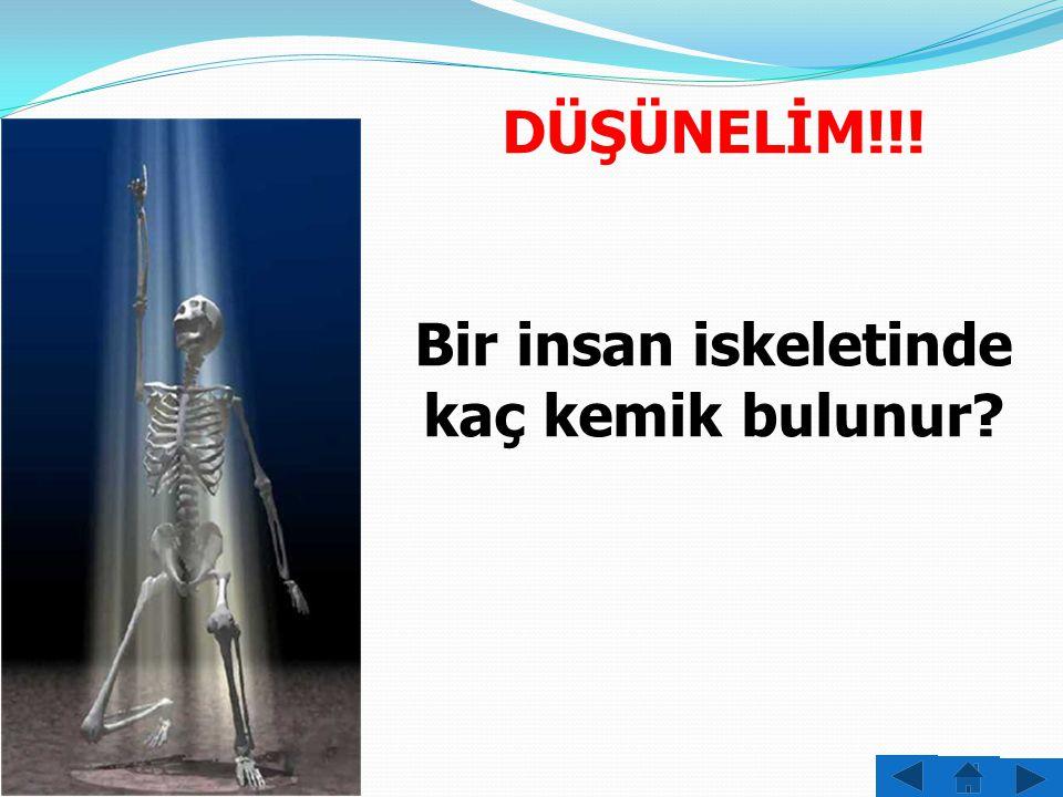 Bir insan iskeletinde kaç kemik bulunur