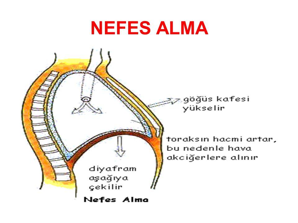 NEFES ALMA