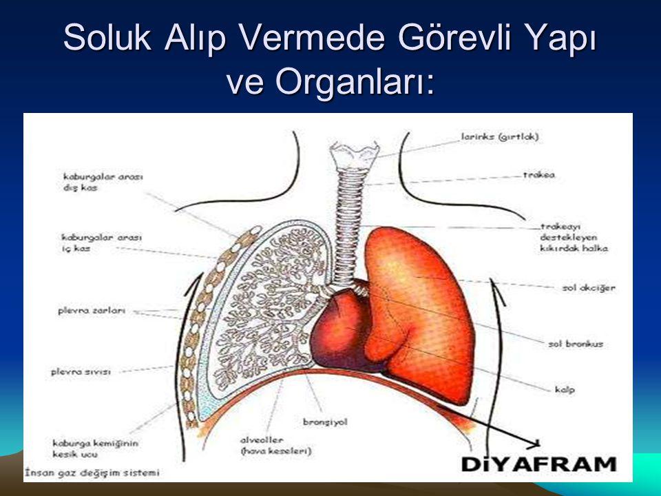 Soluk Alıp Vermede Görevli Yapı ve Organları: