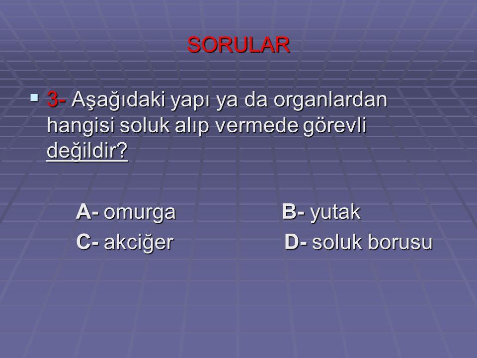 SORULAR 3- Aşağıdaki yapı ya da organlardan hangisi soluk alıp vermede görevli değildir A- omurga B- yutak.