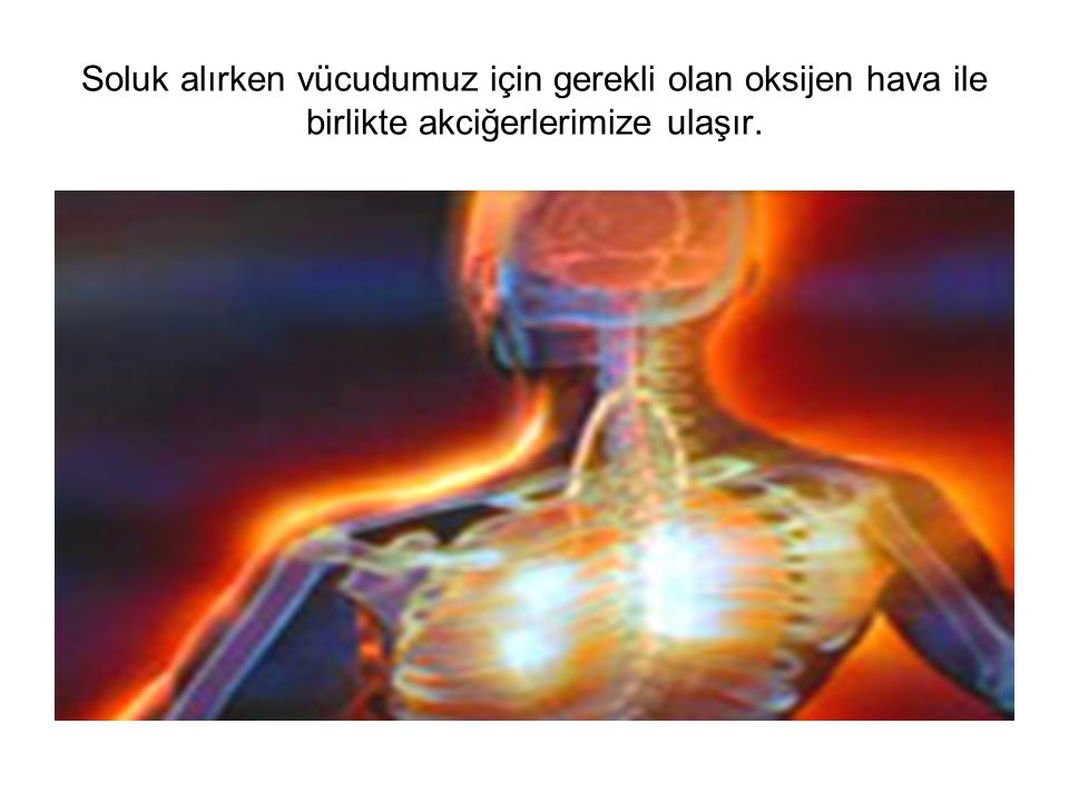 Soluk alırken vücudumuz için gerekli olan oksijen hava ile birlikte akciğerlerimize ulaşır.