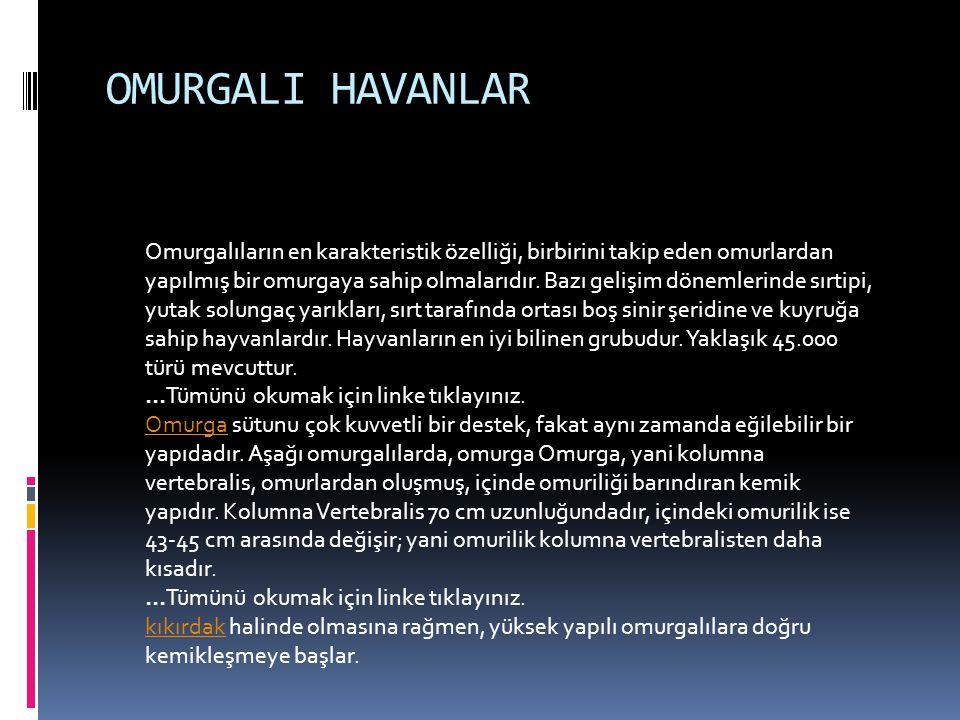 OMURGALI HAVANLAR