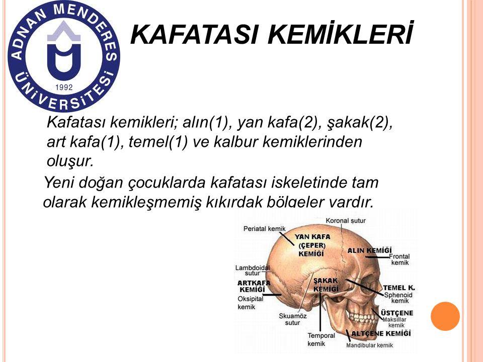 KAFATASI KEMİKLERİ Kafatası kemikleri; alın(1), yan kafa(2), şakak(2), art kafa(1), temel(1) ve kalbur kemiklerinden oluşur.