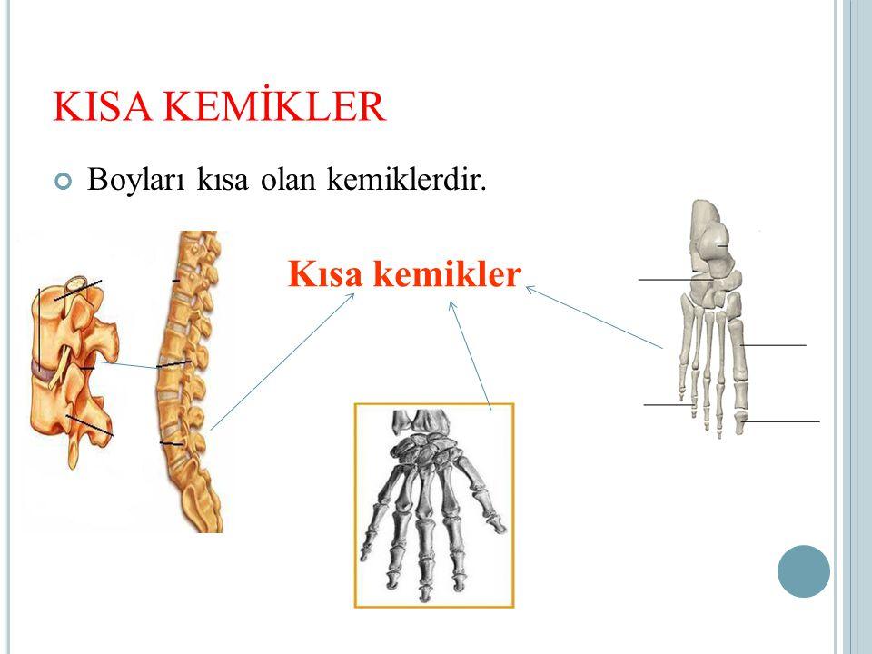 KISA KEMİKLER Boyları kısa olan kemiklerdir. Kısa kemikler
