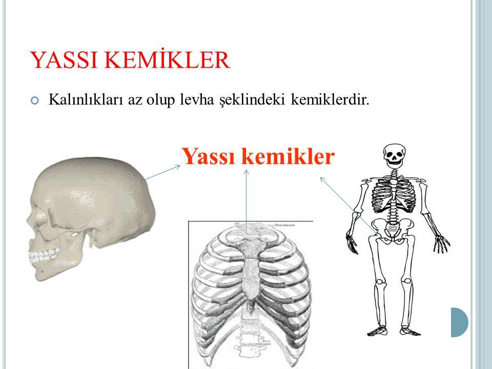 YASSI KEMİKLER Yassı kemikler