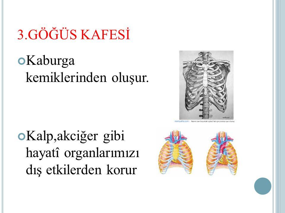 3.GÖĞÜS KAFESİ Kaburga kemiklerinden oluşur.