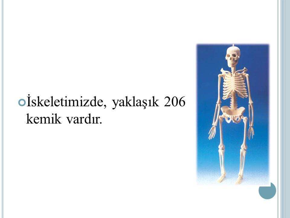İskeletimizde, yaklaşık 206 kemik vardır.