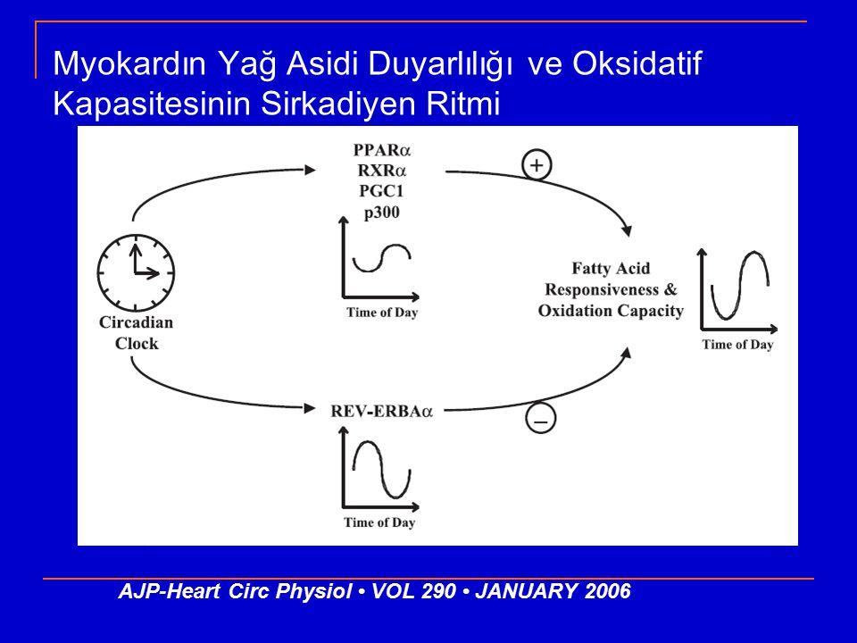Myokardın Yağ Asidi Duyarlılığı ve Oksidatif Kapasitesinin Sirkadiyen Ritmi