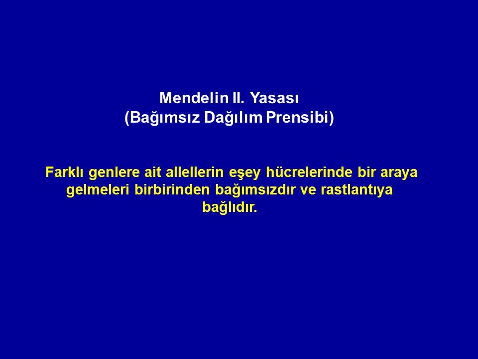 Mendelin II. Yasası (Bağımsız Dağılım Prensibi)