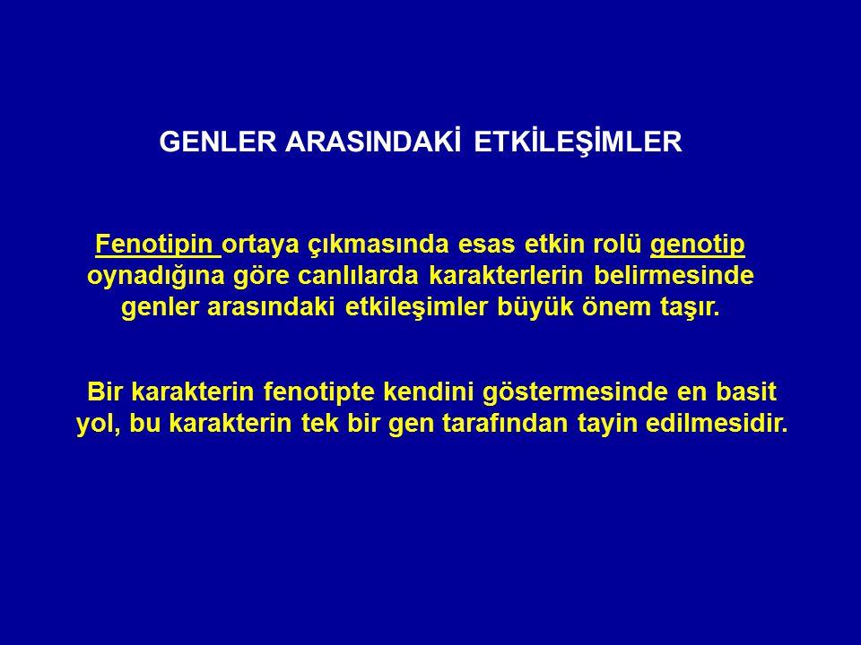 GENLER ARASINDAKİ ETKİLEŞİMLER