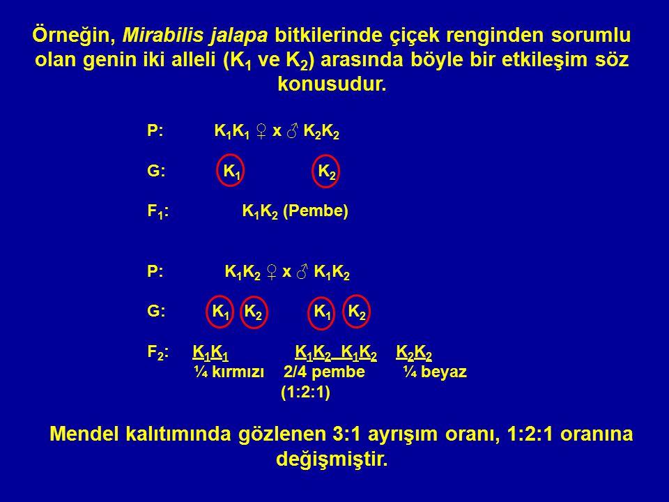 Örneğin, Mirabilis jalapa bitkilerinde çiçek renginden sorumlu olan genin iki alleli (K1 ve K2) arasında böyle bir etkileşim söz konusudur.