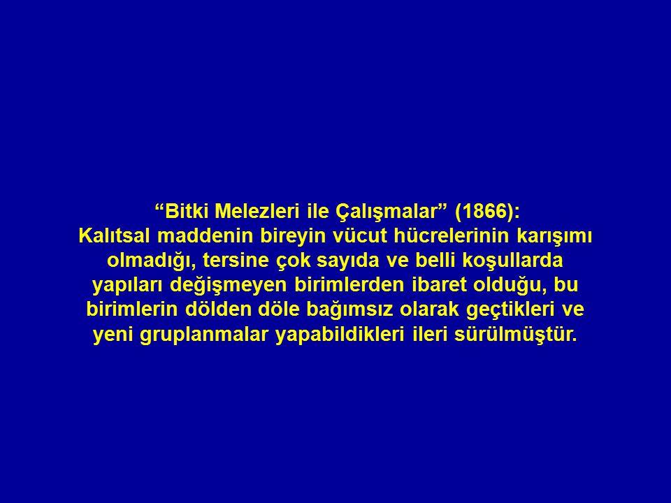 Bitki Melezleri ile Çalışmalar (1866):