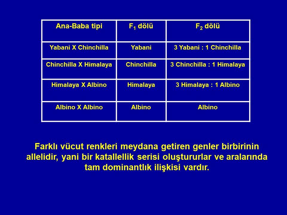 Ana-Baba tipi F1 dölü. F2 dölü. Yabani X Chinchilla. Yabani. 3 Yabani : 1 Chinchilla. Chinchilla X Himalaya.