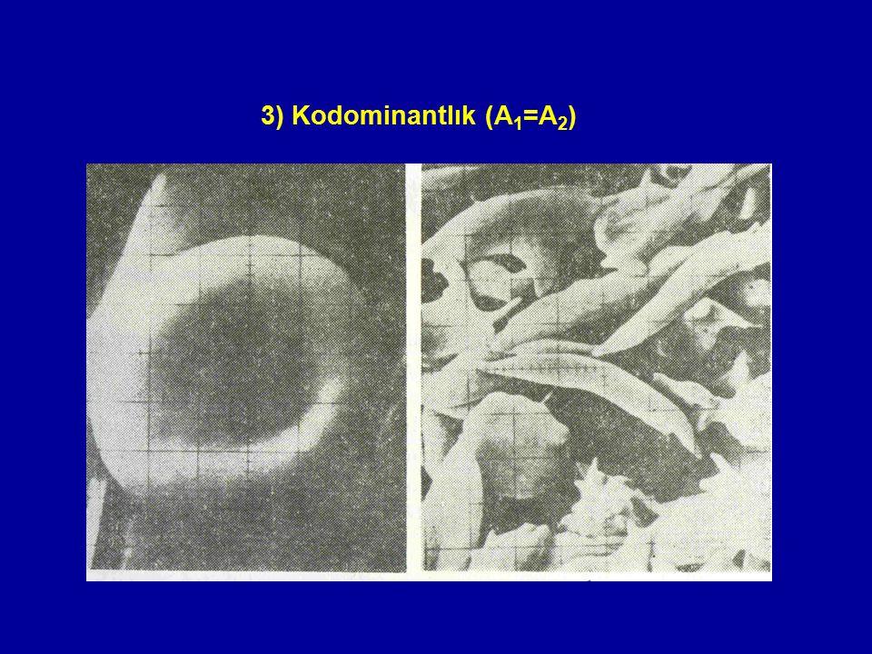 3) Kodominantlık (A1=A2)