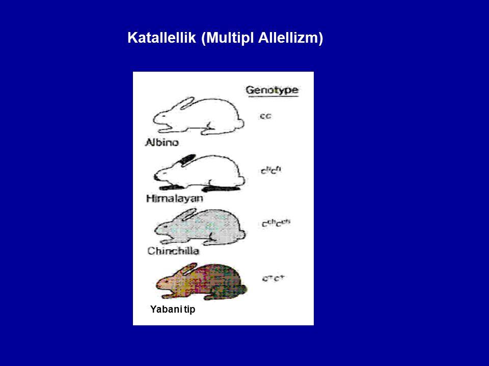 Katallellik (Multipl Allellizm)