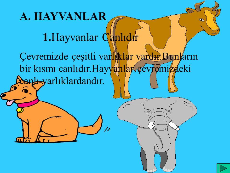 A. HAYVANLAR 1.Hayvanlar Canlıdır