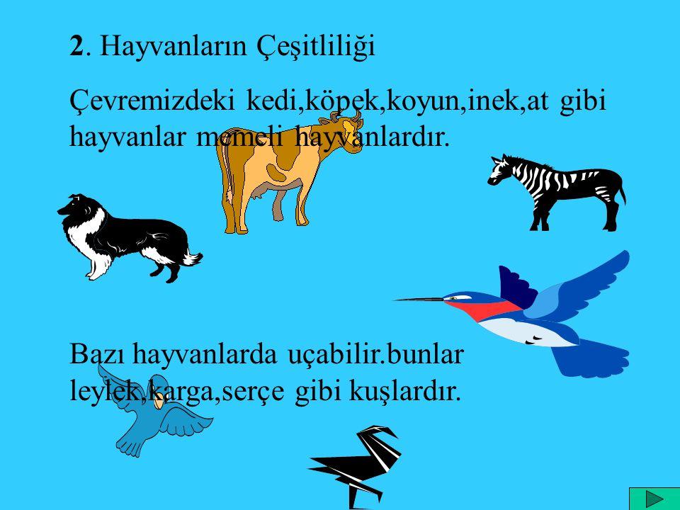2. Hayvanların Çeşitliliği