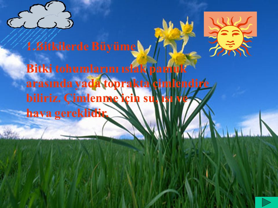1.Bitkilerde Büyüme Bitki tohumlarını ıslak pamuk arasında yada toprakta çimlendire biliriz.