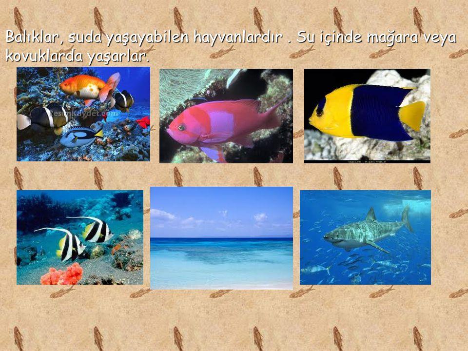 Balıklar, suda yaşayabilen hayvanlardır