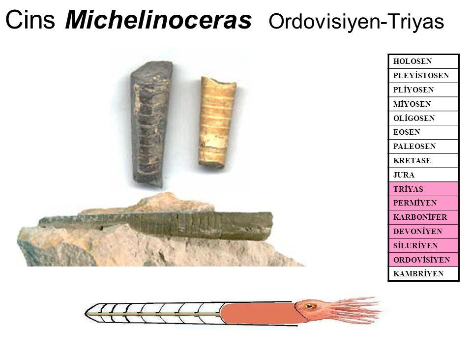 Cins Michelinoceras Ordovisiyen-Triyas