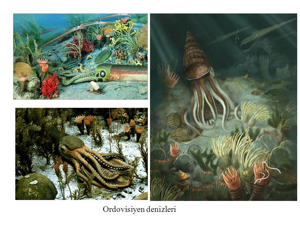 Ordovisiyen denizleri
