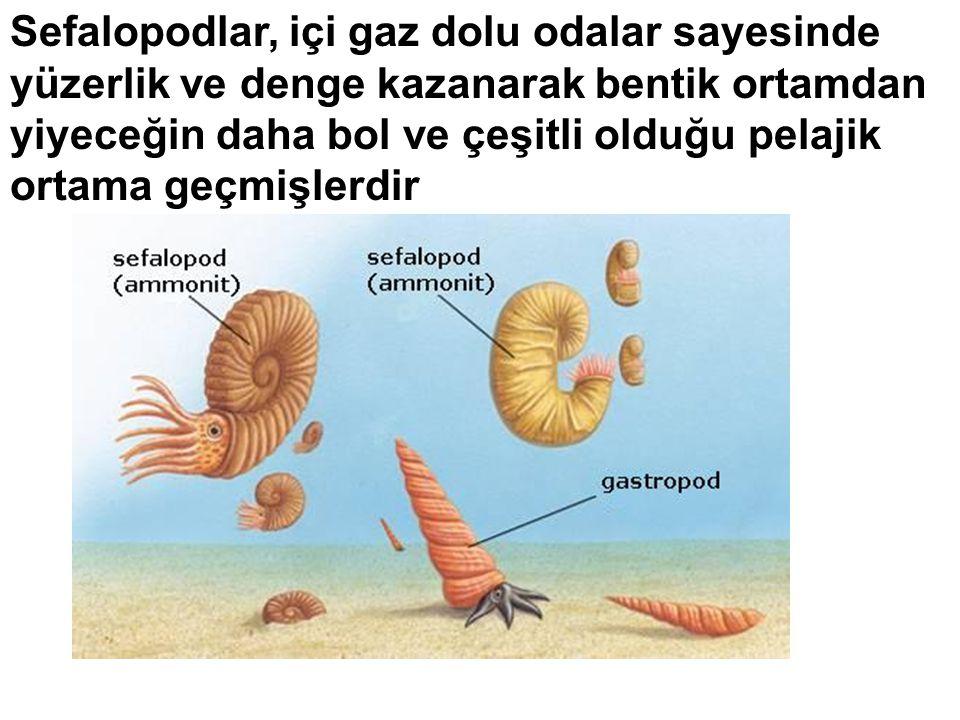 Sefalopodlar, içi gaz dolu odalar sayesinde yüzerlik ve denge kazanarak bentik ortamdan yiyeceğin daha bol ve çeşitli olduğu pelajik ortama geçmişlerdir