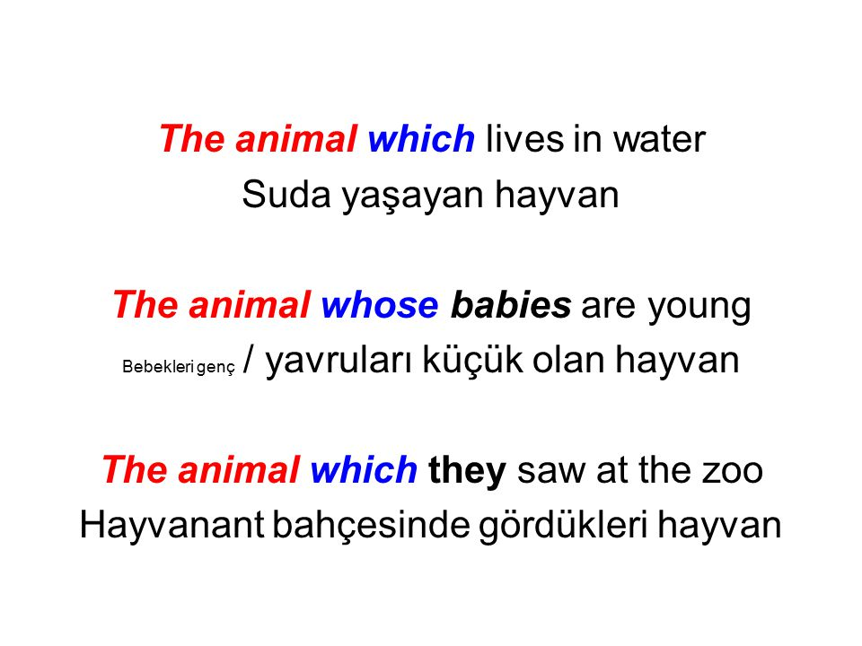 The animal which lives in water Suda yaşayan hayvan
